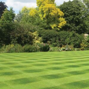 Estate Lawn Seed With Ryegrass 10kg