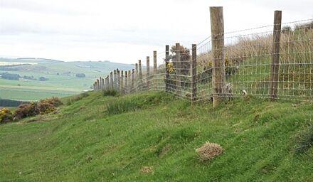 Stock Fence L8/80/15 50m
